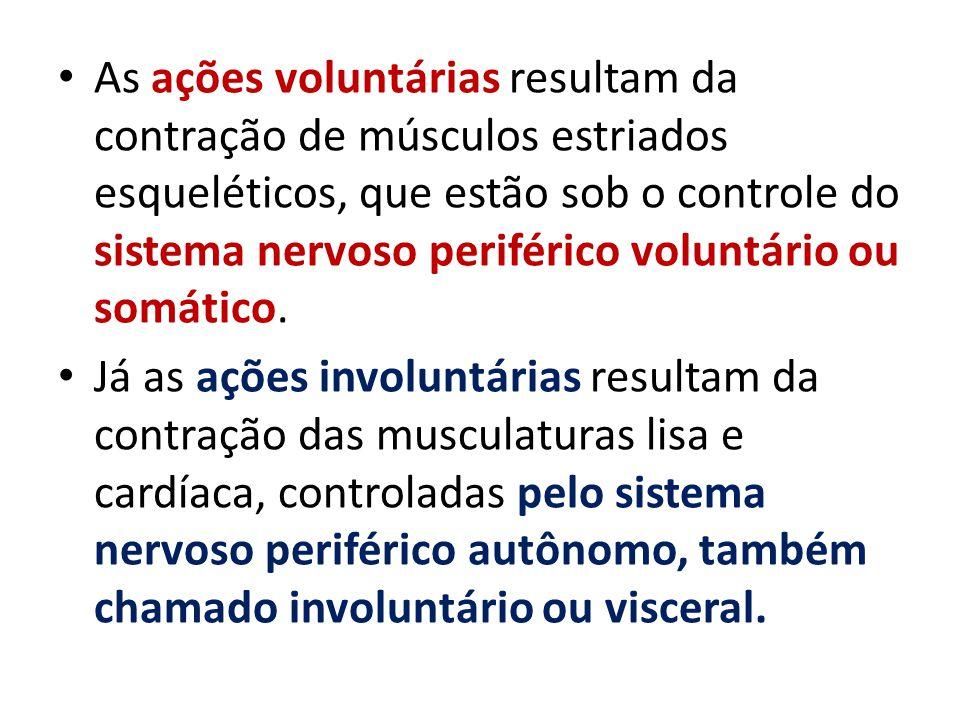 As ações voluntárias resultam da contração de músculos estriados esqueléticos, que estão sob o controle do sistema nervoso periférico voluntário ou so
