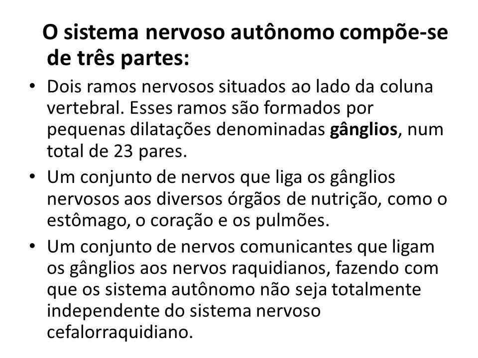 O sistema nervoso autônomo compõe-se de três partes: Dois ramos nervosos situados ao lado da coluna vertebral. Esses ramos são formados por pequenas d
