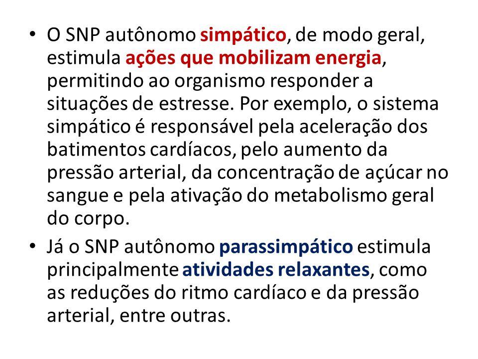 O SNP autônomo simpático, de modo geral, estimula ações que mobilizam energia, permitindo ao organismo responder a situações de estresse. Por exemplo,