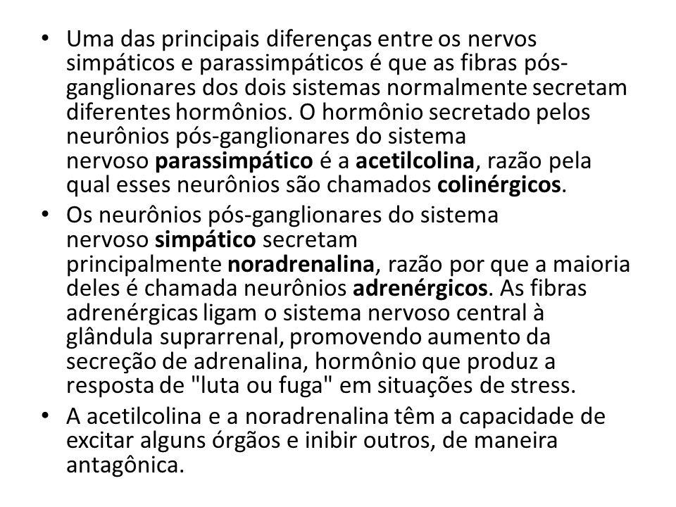 Uma das principais diferenças entre os nervos simpáticos e parassimpáticos é que as fibras pós- ganglionares dos dois sistemas normalmente secretam di