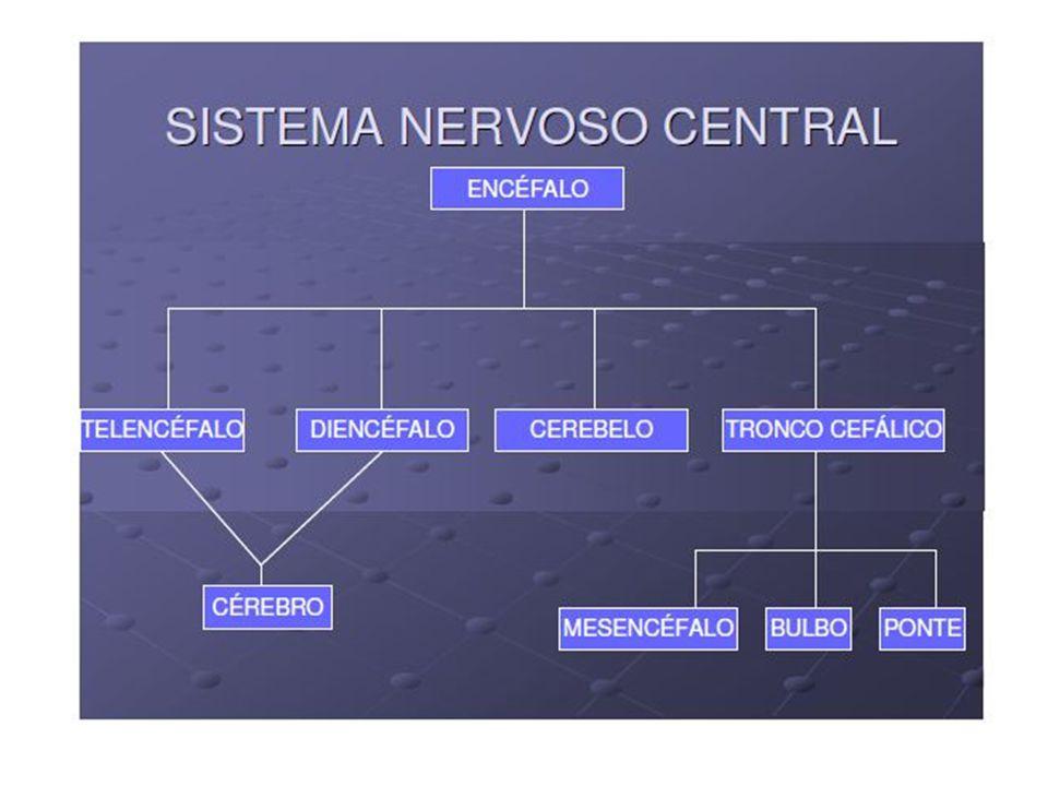 O SNP autônomo simpático, de modo geral, estimula ações que mobilizam energia, permitindo ao organismo responder a situações de estresse.