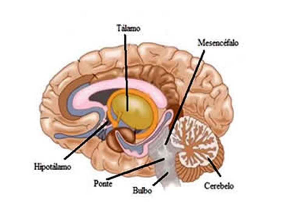 Uma das principais diferenças entre os nervos simpáticos e parassimpáticos é que as fibras pós- ganglionares dos dois sistemas normalmente secretam diferentes hormônios.