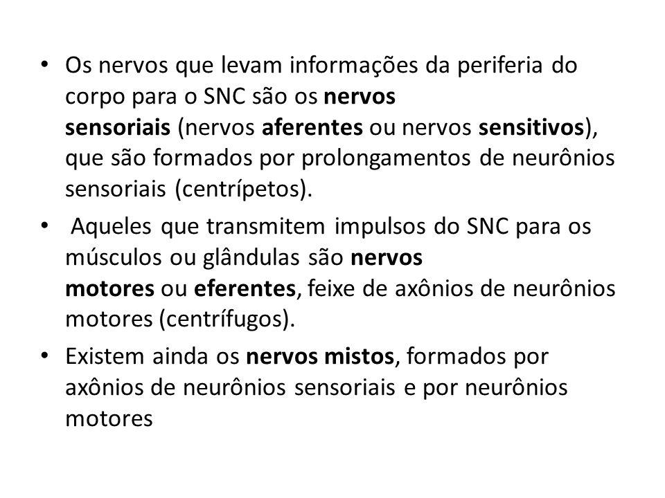 Os nervos que levam informações da periferia do corpo para o SNC são os nervos sensoriais (nervos aferentes ou nervos sensitivos), que são formados po