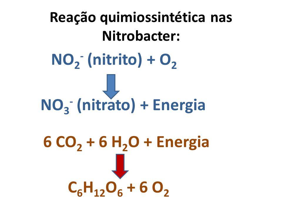 Reação quimiossintética nas Nitrobacter: NO 2 - (nitrito) + O 2 NO 3 - (nitrato) + Energia 6 CO 2 + 6 H 2 O + Energia C 6 H 12 O 6 + 6 O 2