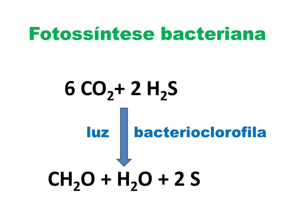 Fotossíntese bacteriana 6 CO 2 + 2 H 2 S luz bacterioclorofila CH 2 O + H 2 O + 2 S