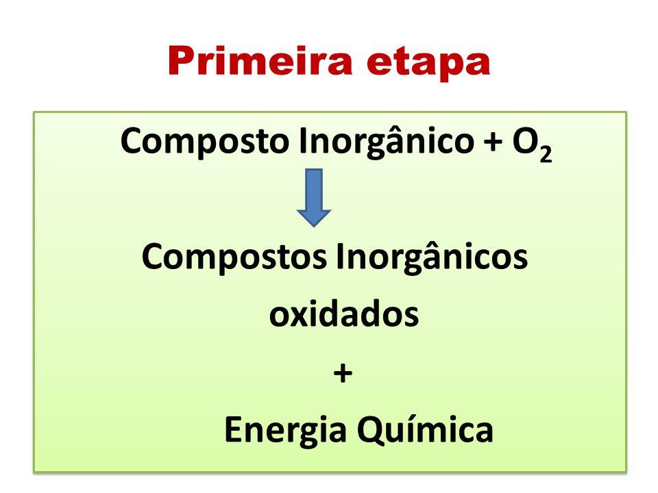 Primeira etapa Composto Inorgânico + O 2 Compostos Inorgânicos oxidados + Energia Química Composto Inorgânico + O 2 Compostos Inorgânicos oxidados + E