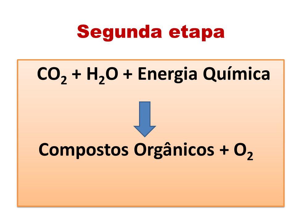 Segunda etapa CO 2 + H 2 O + Energia Química Compostos Orgânicos + O 2 CO 2 + H 2 O + Energia Química Compostos Orgânicos + O 2