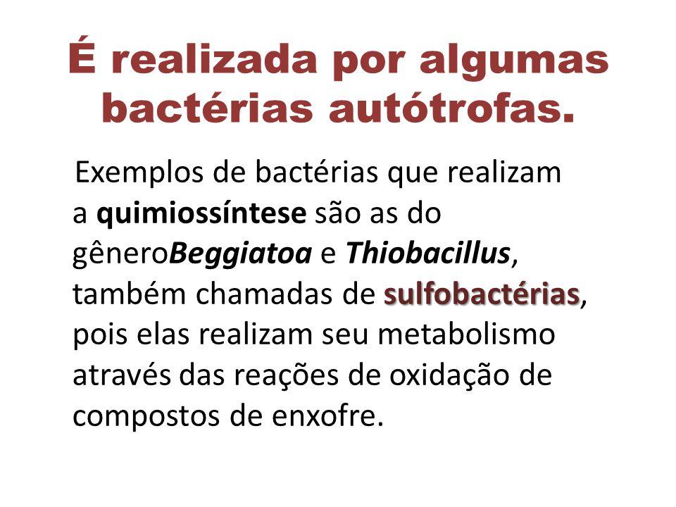 É realizada por algumas bactérias autótrofas. sulfobactérias Exemplos de bactérias que realizam a quimiossíntese são as do gêneroBeggiatoa e Thiobacil