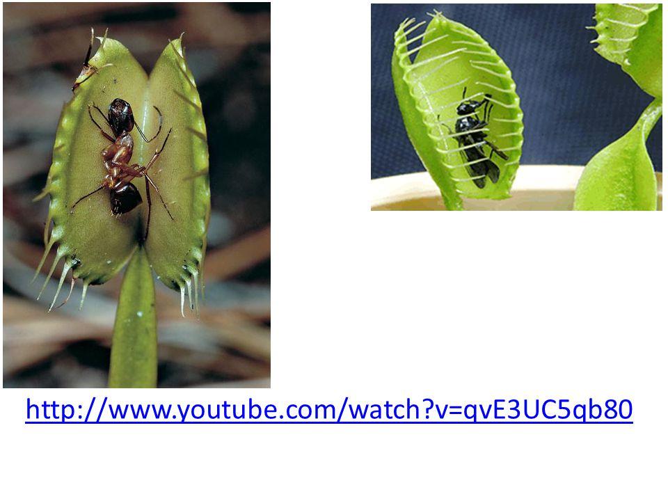 http://www.youtube.com/watch?v=qvE3UC5qb80