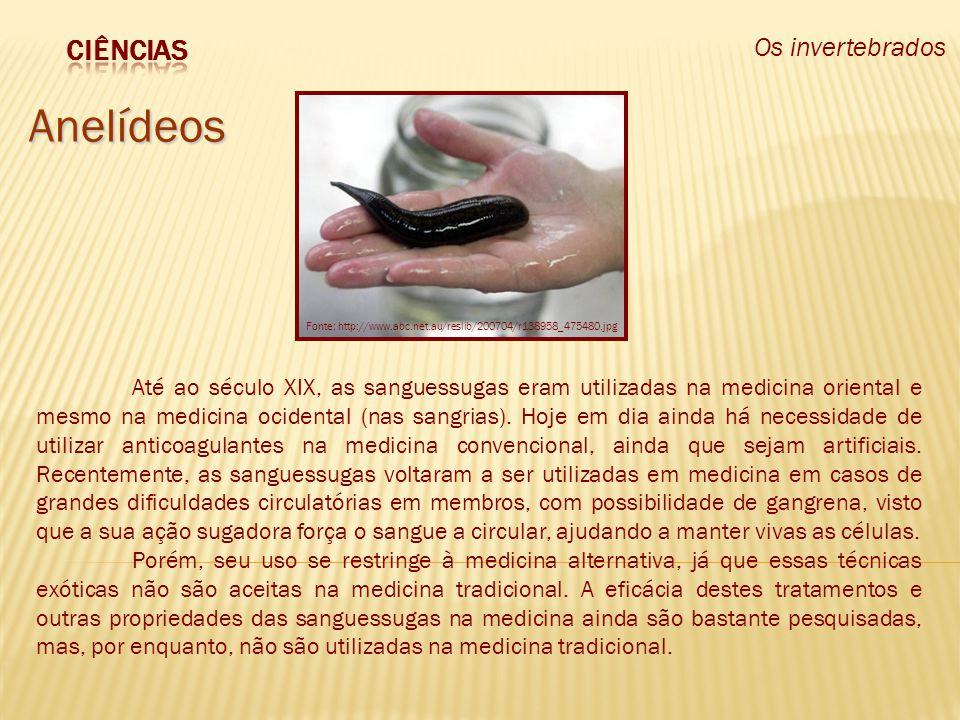Os invertebrados Anelídeos Até ao século XIX, as sanguessugas eram utilizadas na medicina oriental e mesmo na medicina ocidental (nas sangrias). Hoje