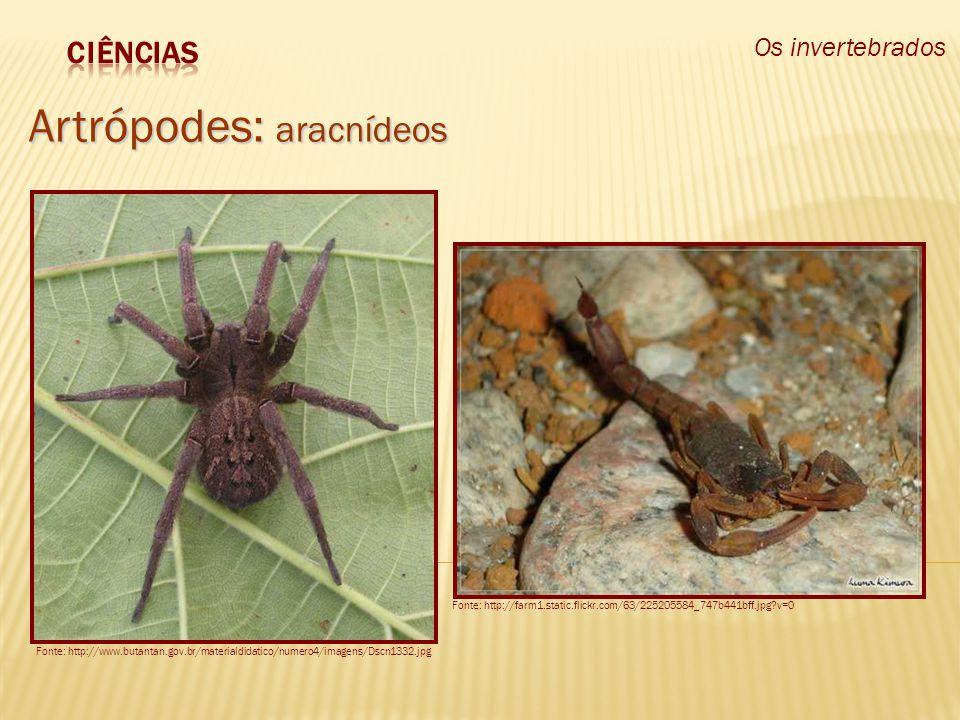 Os invertebrados Artrópodes: aracnídeos Fonte: http://www.butantan.gov.br/materialdidatico/numero4/imagens/Dscn1332.jpg Fonte: http://farm1.static.fli