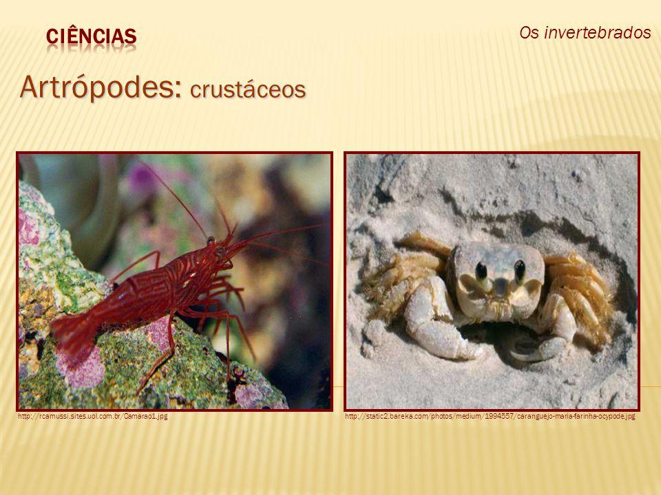 Os invertebrados Artrópodes: crustáceos http://rcamussi.sites.uol.com.br/Camarao1.jpghttp://static2.bareka.com/photos/medium/1994557/caranguejo-maria-