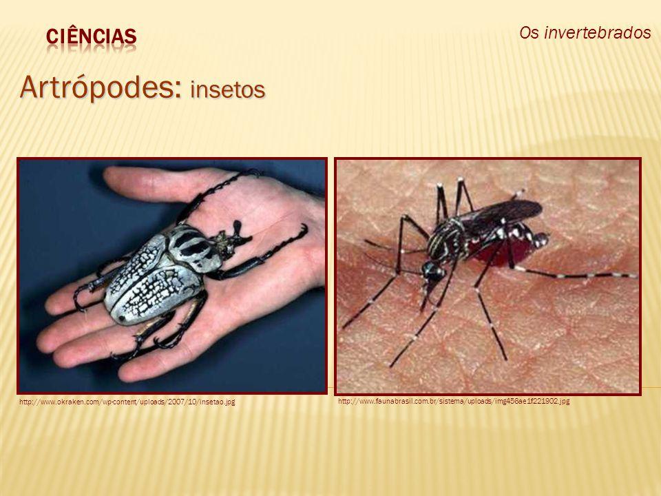 Os invertebrados Artrópodes: insetos http://www.okraken.com/wp-content/uploads/2007/10/insetao.jpg http://www.faunabrasil.com.br/sistema/uploads/img45