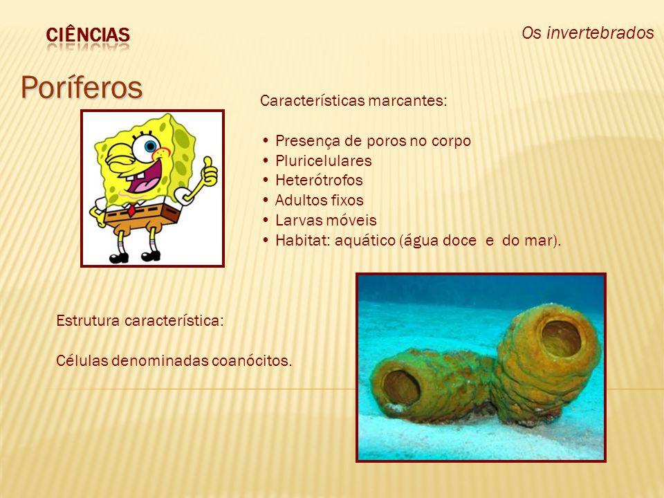 Os invertebrados Poríferos Estrutura característica: Células denominadas coanócitos. Características marcantes: Presença de poros no corpo Pluricelula
