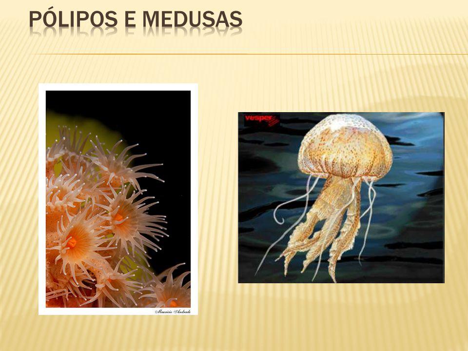 Os invertebrados Platelmintos Fonte: http://evolution.berkeley.edu/evosite/evo101/images/planaria.jpg Fonte: http://w3.ufsm.br/parasitologia/imagensendo/6_24.gif Fonte: http://g1.globo.com/Noticias/Ciencia/foto/0,,13584767-EX,00.jpg Aquisição evolutiva marcante: Surgimento do sistema muscular Cordões nervosos longitudinais Características marcantes: Presença de tubo digestório incompleto Corpo achatado como fita Pluricelulares Heterótrofos Habitat: aquático, terrestre e parasitário