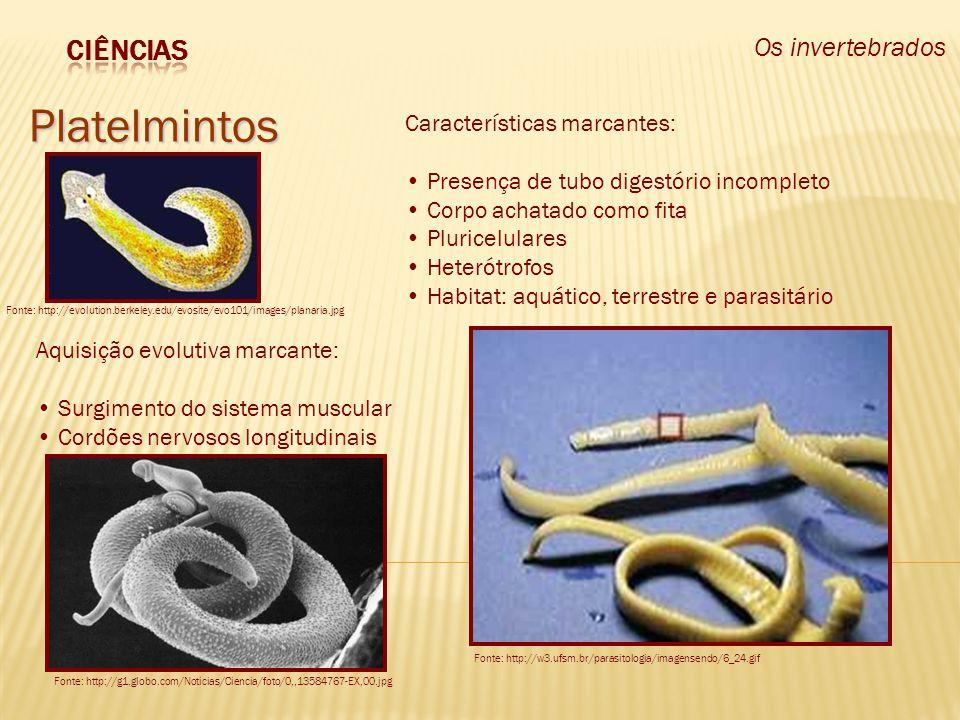 Os invertebrados Nematelmintos Fonte: http://websmed.portoalegre.rs.gov.br/escolas/obino/revista/c11_nematelmintos/nem_vermeasc.jpg Fonte: http://www.organicnutrition.co.uk/images/parasites/ascaris_bolus.gif Aquisição evolutiva marcante: Sistema digestório completo Características marcantes: Presença de tubo digestório completo Corpo cilíndrico e roliço Pluricelulares Heterótrofos Habitat: aquático, terrestre e parasitário