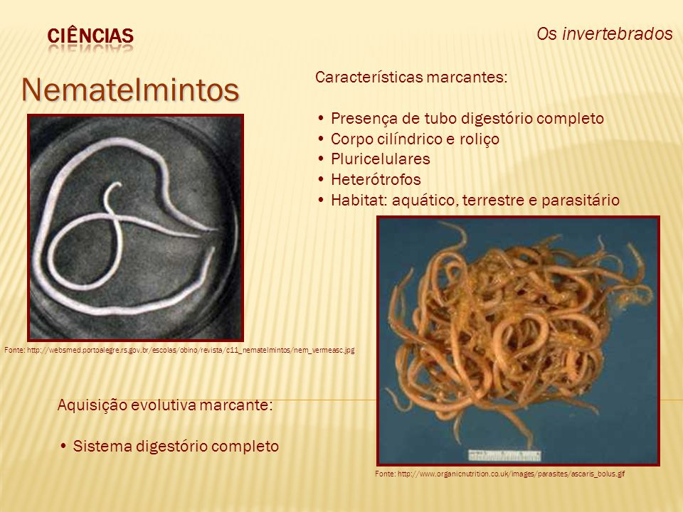 Os invertebrados Nematelmintos Fonte: http://websmed.portoalegre.rs.gov.br/escolas/obino/revista/c11_nematelmintos/nem_vermeasc.jpg Fonte: http://www.