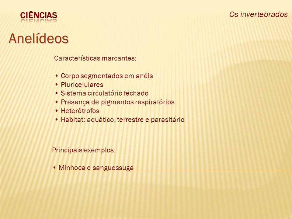 Os invertebrados Equinodermos http://oglobo.globo.com/fotos/2006/10/30/30_MHG_pepino%20do%20mar.jpg