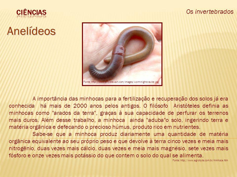 Os invertebrados Anelídeos A importância das minhocas para a fertilização e recuperação dos solos já era conhecida há mais de 2000 anos pelos antigos.
