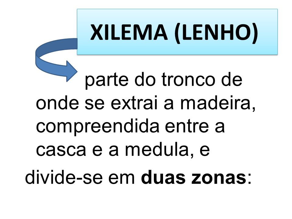 XILEMA (LENHO) parte do tronco de onde se extrai a madeira, compreendida entre a casca e a medula, e divide-se em duas zonas: