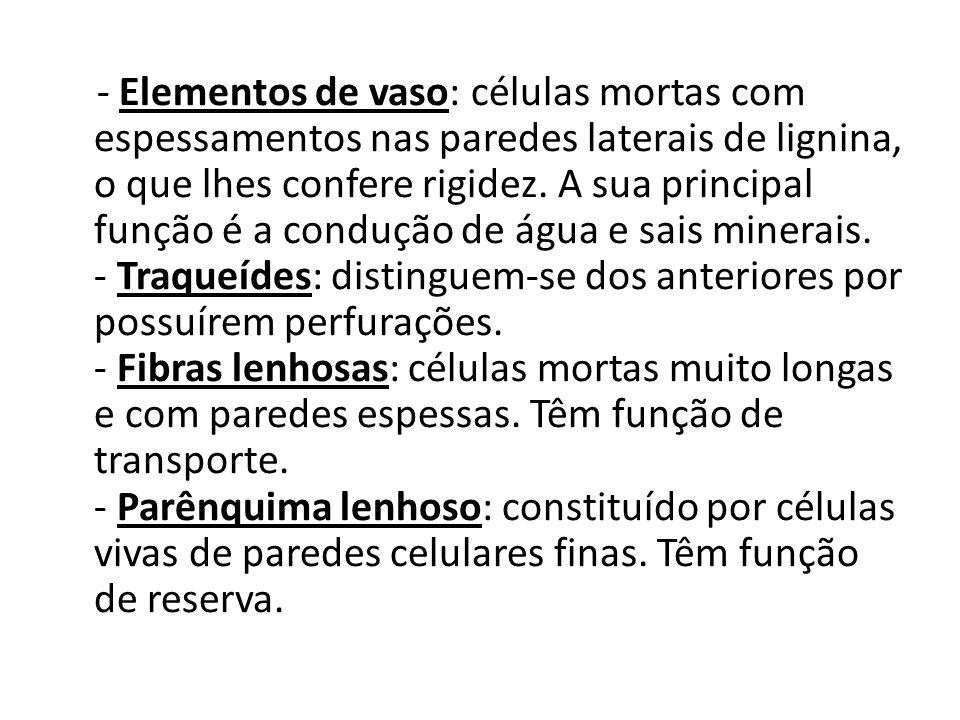 - Elementos de vaso: células mortas com espessamentos nas paredes laterais de lignina, o que lhes confere rigidez.