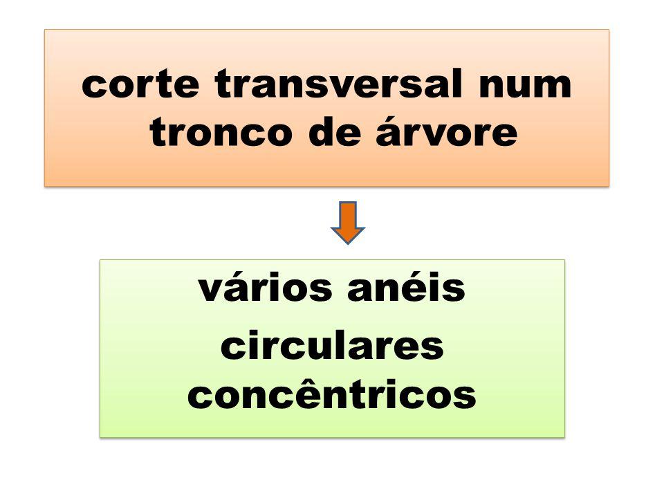 corte transversal num tronco de árvore vários anéis circulares concêntricos vários anéis circulares concêntricos