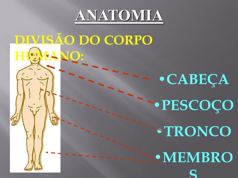 Tipos de músculos: - Esquelético - Esquelético - Liso - Liso - Cardíaco - Cardíaco