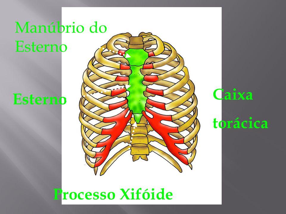 Frontal Parietal Temporal Occipita l Temporal Esfenóide