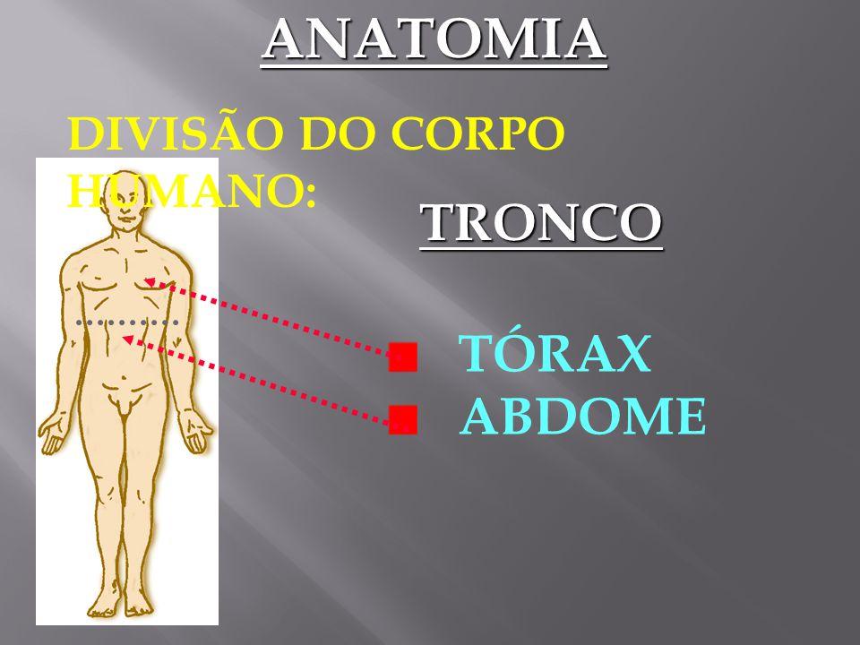 ANATOMIA DIVISÃO DO CORPO HUMANO: CABEÇA PESCOÇO TRONCO MEMBRO S