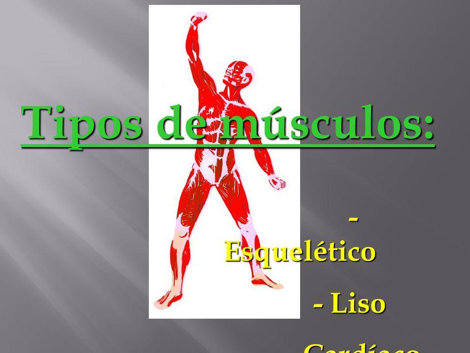 SISTEMA MUSCULAR Os músculos são elementos ativos do movimento do corpo. A musculatura não apenas torna possível o movimento como determina a posição