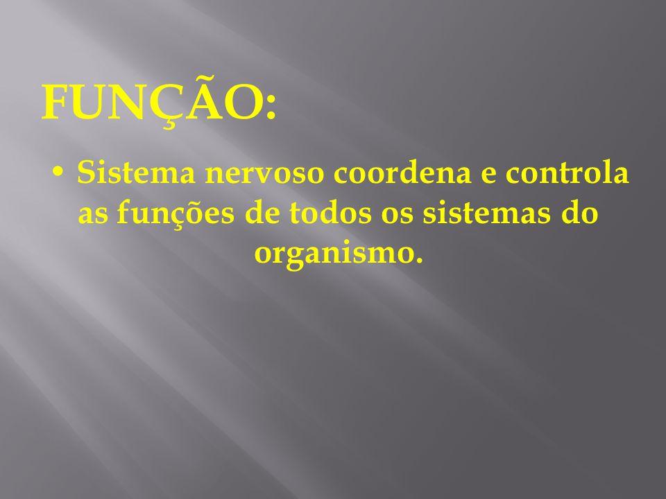 SISTEMA NERVOSO É constituído por inúmeras células nervosas. A célula nervosa é chamada de neurônio.