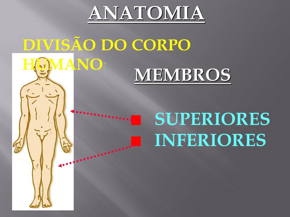 DIVISÃO DO CORPO HUMANO: TRONCO TÓRAX ABDOMEANATOMIA