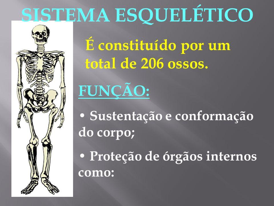 Junturas: Junturas ou articulações são estruturas que servem para unir dois ou mais ossos.