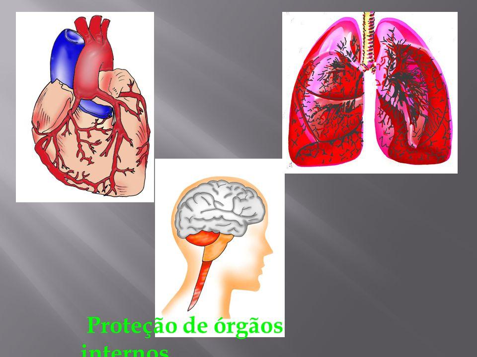 SISTEMA ESQUELÉTICO É constituído por um total de 206 ossos. FUNÇÃO: Sustentação e conformação do corpo; Proteção de órgãos internos como: