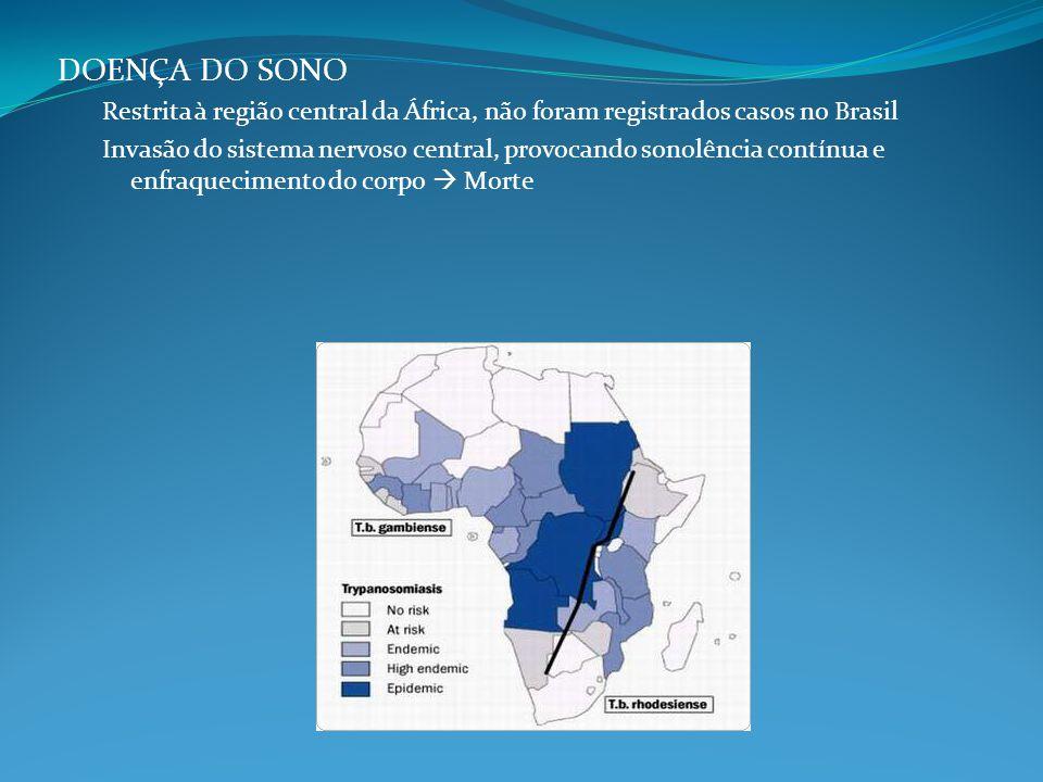 LEISHMANIOSE TEGUMENTAR AMERICANA Úlcera de Baurú Leishmania braziliensis Transmitido pela picada de mosquitos fêmeas da família dos flebotomídeos (Gênero Lutzomia) Mosquito palha