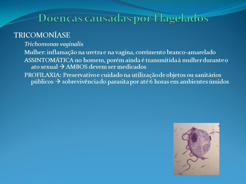 GIARDÍASE Giardia lamblia Infecções no intestino delgado e diarréias Desidratação Doença muito comum em crianças de creches públicas Transmissão pela ingestão de água e alimentos contaminados com os cistos da Giardia