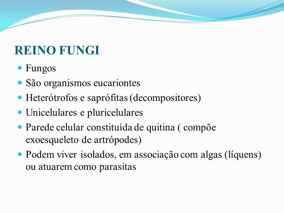 REINO FUNGI São divididos em 4 grupos: Ascomicetos (Saccharomyces, Penicillium ) Basidiomicetos( orelhas- de-pau, cogumelos) Zigomicetos (Rhizopus- bolor preto de pão) Deuteromicetos ( Candida)