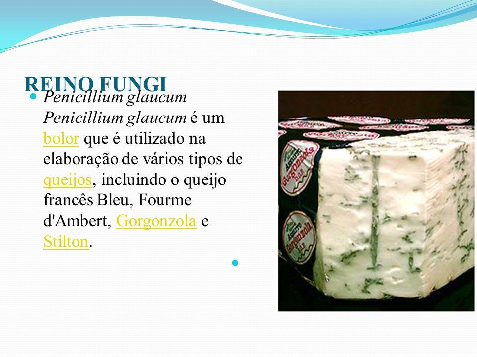 REINO FUNGI Penicillium roqueforti Penicillium roqueforti é um vulgar fungo saprófito, que aparece na natureza e pode ser isolado do solo, degradando substâncias orgânicas e partes vegetais.