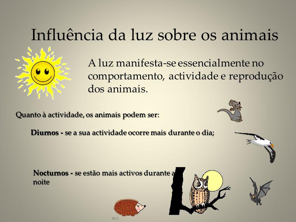 Influência da luz sobre os animais A luz manifesta-se essencialmente no comportamento, actividade e reprodução dos animais. Nocturnos - se estão mais