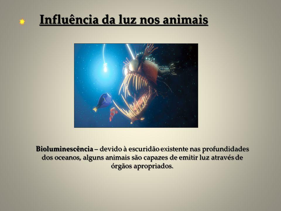 Bioluminescência – devido à escuridão existente nas profundidades dos oceanos, alguns animais são capazes de emitir luz através de órgãos apropriados.