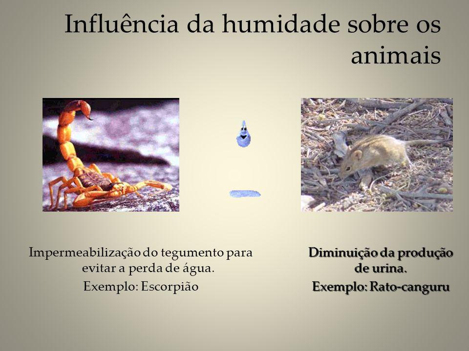 Impermeabilização do tegumento para evitar a perda de água. Exemplo: Escorpião Diminuição da produção de urina. Exemplo: Rato-canguru Influência da hu