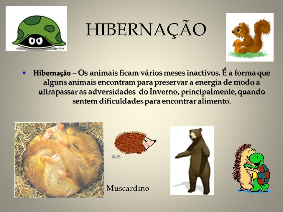 Hibernação – Os animais ficam vários meses inactivos. É a forma que alguns animais encontram para preservar a energia de modo a ultrapassar as adversi