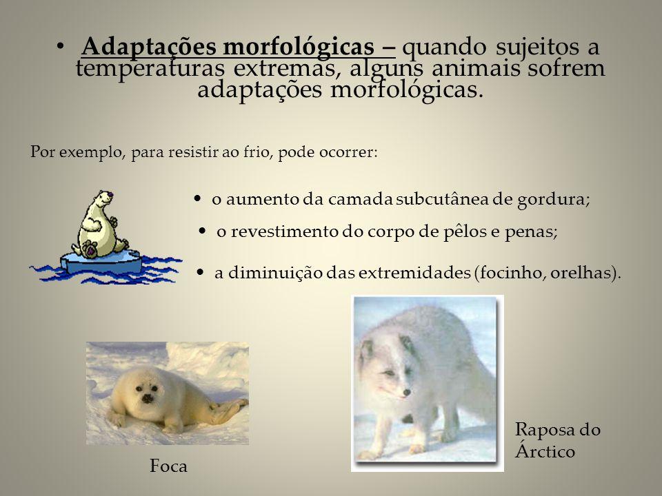 Adaptações morfológicas – quando sujeitos a temperaturas extremas, alguns animais sofrem adaptações morfológicas. Por exemplo, para resistir ao frio,