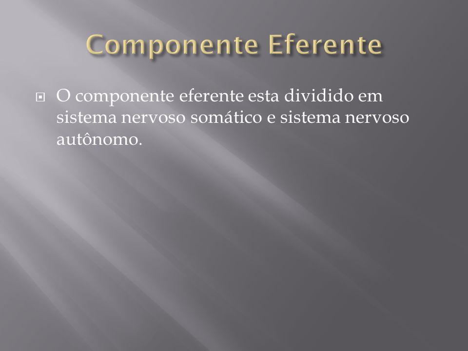 O componente eferente esta dividido em sistema nervoso somático e sistema nervoso autônomo.