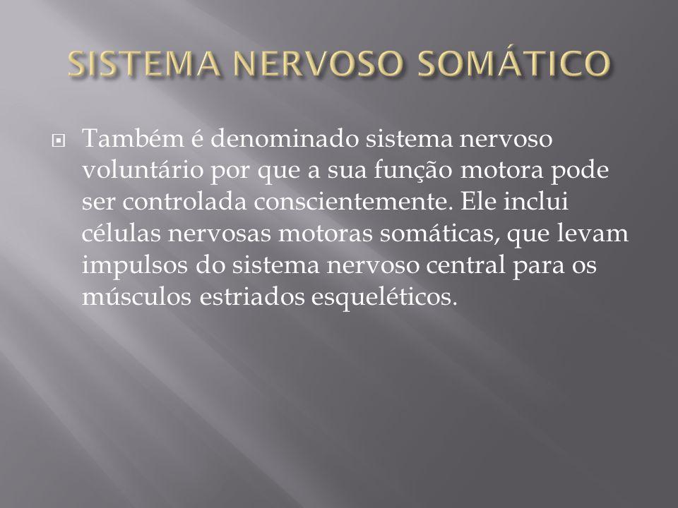 Também é denominado sistema nervoso voluntário por que a sua função motora pode ser controlada conscientemente. Ele inclui células nervosas motoras so