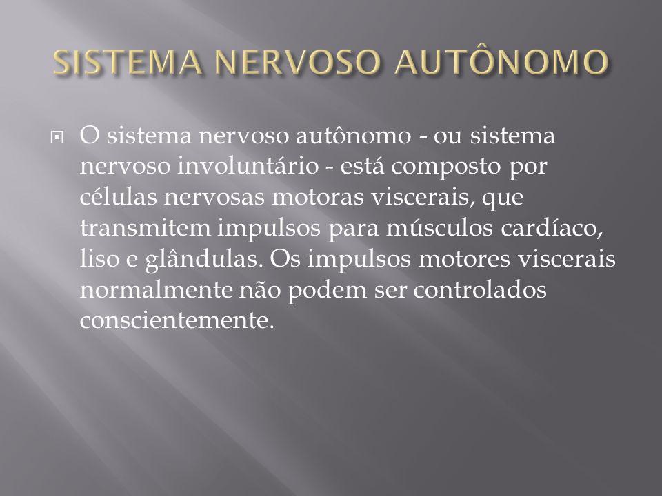 O sistema nervoso autônomo - ou sistema nervoso involuntário - está composto por células nervosas motoras viscerais, que transmitem impulsos para músc