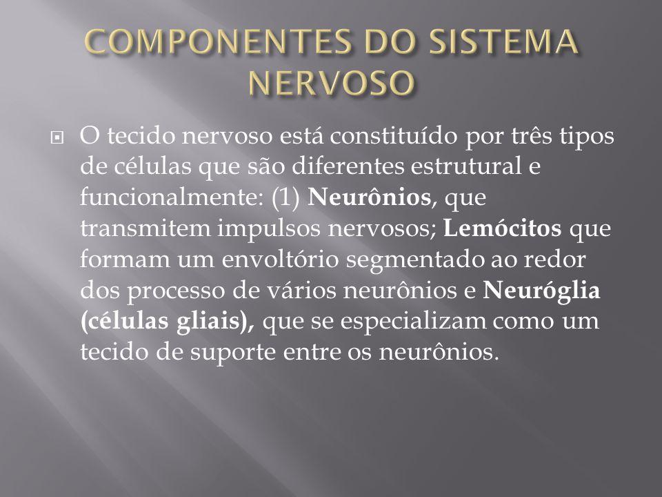 O tecido nervoso está constituído por três tipos de células que são diferentes estrutural e funcionalmente: (1) Neurônios, que transmitem impulsos ner