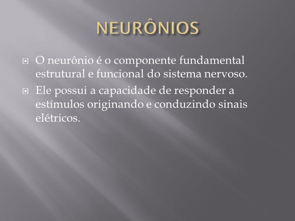 O neurônio é o componente fundamental estrutural e funcional do sistema nervoso. Ele possui a capacidade de responder a estímulos originando e conduzi
