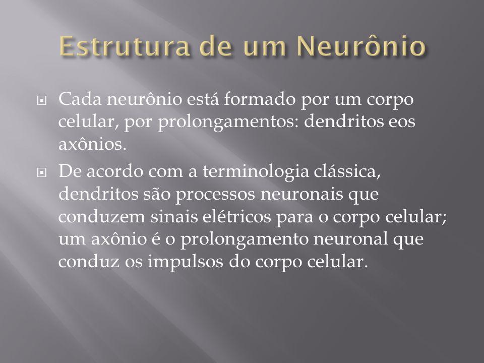 Cada neurônio está formado por um corpo celular, por prolongamentos: dendritos eos axônios. De acordo com a terminologia clássica, dendritos são proce