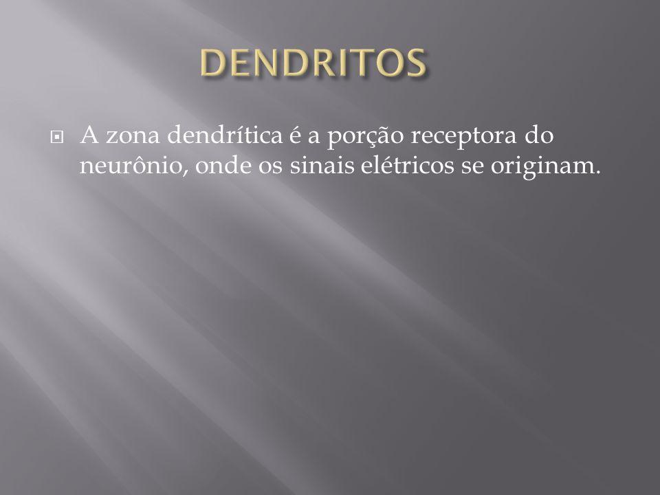 A zona dendrítica é a porção receptora do neurônio, onde os sinais elétricos se originam.